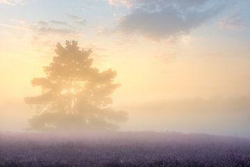 Mysteriöser Sonnenaufgang auf der Brunssummerheide von John van de Gazelle
