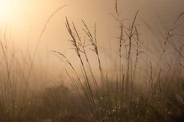 goldenes Gras von Tania Perneel