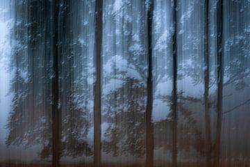 Spookachtig bos van Jarno van Osch