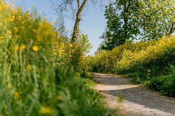 Wanderweg von Myrthe Vlasveld