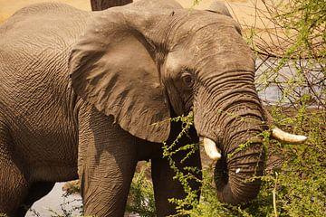 Olifant eet pas omgevallen boom van Erna Haarsma-Hoogterp
