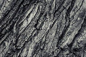 Tree bark van Malte Pott