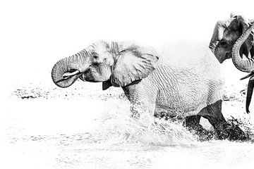 Olifant in een waterpoel van Robert Styppa