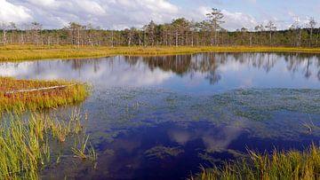 Overzicht over het moeras van Virn in Estland van Gert Bunt