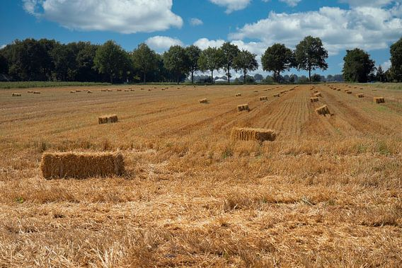 Het gemaaide Drentse graanveld