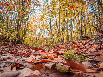 Bladeren op de grond van Martijn Tilroe