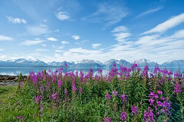 Noorwegen. van Tilly Meijer