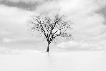 IJs boom von Iris van Loon