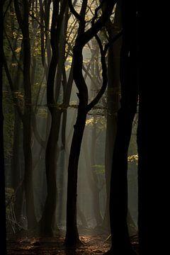 Mystic forest von Hans Koster