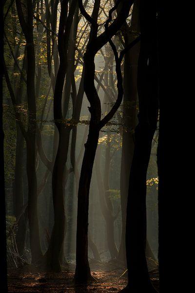 Mystic forest sur Hans Koster