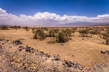 Tanzaniaanse woestijn von Peter Postmus