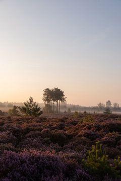 Paarse heide met mist van Alwin Kroon