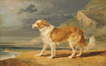 Langhaarcollie, James Ward