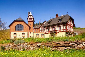 Avelsbach-wijnbouwgebied in Trier van Berthold Werner