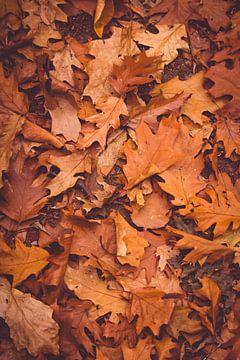 Herfstbladeren van Inge Smulders