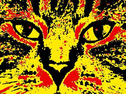 Oog in oog met een kat