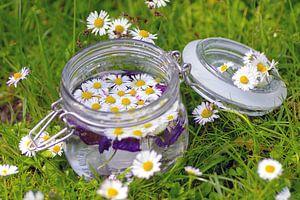 Wildkräuter Gänseblümchen Stillleben