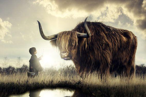 Een kleine jongen maakt kennis met een Schotse hooglander