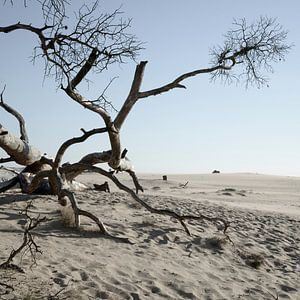 National Park de Hoge Veluwe sur Hannie Bom