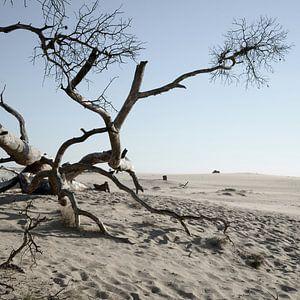 National Park de Hoge Veluwe von Hannie Bom