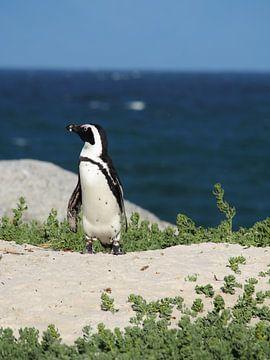 Pinguin auf der Wache von Marleen Berendse