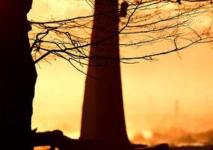 Mystische Momente von Lars Tuchel