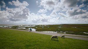 Faire du vélo le long du Waddendijk sur Terschelling, le Strieper Kwelder sur Jolanda Kleij