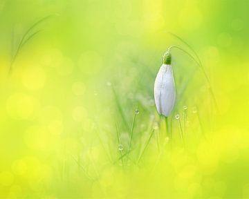 Peeking through Yellow von Michelle Coppiens