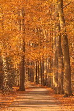 Pad door het bos tijdens een mooie herfstdag van Sjoerd van der Wal