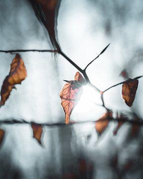 feuille d'automne sur Arnold Maisner