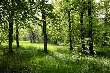 Frühlingswald sur Renate Knapp