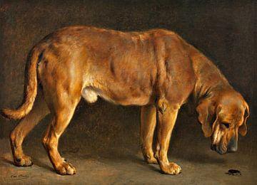Ein Broholmer Hund, der einen Hirschkäfer beobachtet, Otto Bache