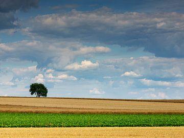 Wolkenstimmung über einem Getreidefeld