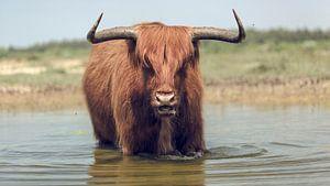 De benadering van een stier met hoorns.