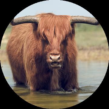 De benadering van een stier met hoorns. van Bastiaan Schuit
