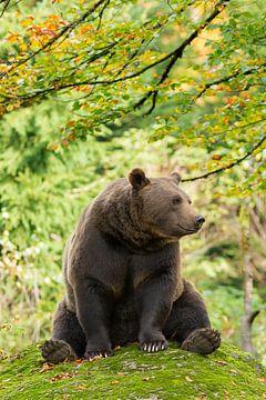 Winnie Puuh der Bär von Rob Christiaans