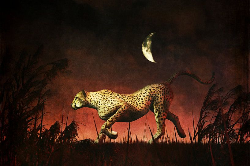 Dierenrijk – Cheetah  op jacht tijdens de Afrikaanse nacht van Jan Keteleer