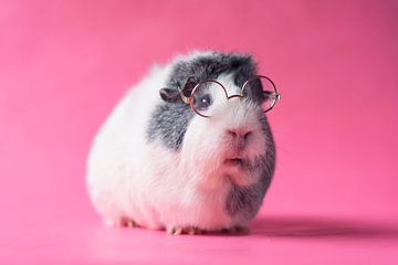 Guinea Pig With Glasses sur Marloes van Antwerpen