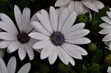 Bloemen van Dennis Visser