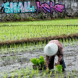Rice planter in Bali sur Brenda Reimers