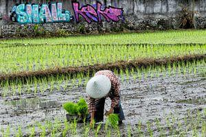 Rijstplanter in Bali van Brenda Reimers