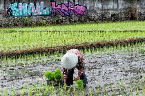 Rijstplanter in Bali van