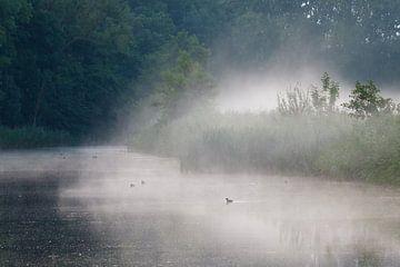 Eenden in de mist. Oostbroek, De Bilt (NL) van Sjaak den Breeje