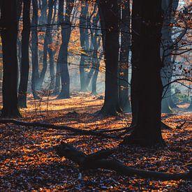 Zonnestralen door de herfst bomen van Fotografiecor .nl