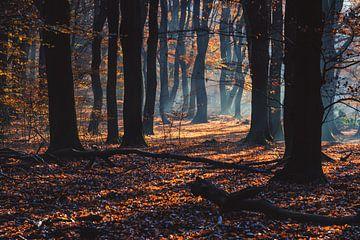 Sonnenstrahlen durch herbstliche Bäume von Fotografiecor .nl
