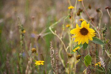 Sonnige Blume von Irene Lantman