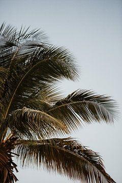 Tropische palm sfeer | Kleurrijke reisfotografie | Curaçao, Nederlandse Antillen van Trix Leeflang