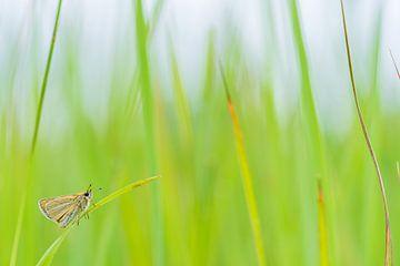 Schmetterling im Gras von Fokko Erhart