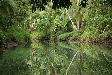 Mangrove Damas Island Costa Rica sur