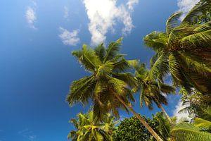 Palmbomen. Indische Oceaan. Seychellen van Dmitriy Koublitskiy